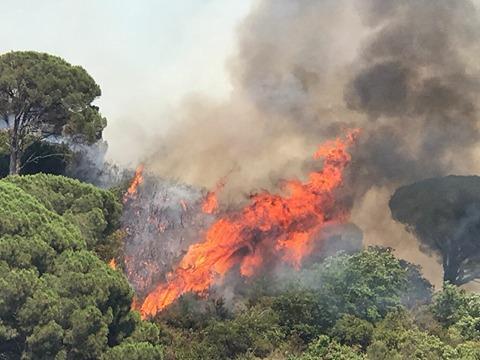 """Estate in arrivo. D'Uva: """"Cosa sta facendo l'amministrazione per evitare una nuova emergenza incendi?"""""""