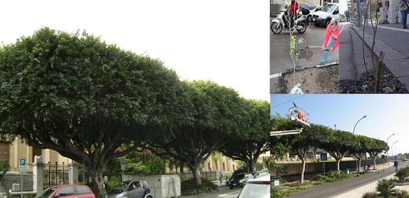 Gestione verde urbano, Cantali: E' disastrosa tra alberi che si schiantano al suolo e punteruolo rosso