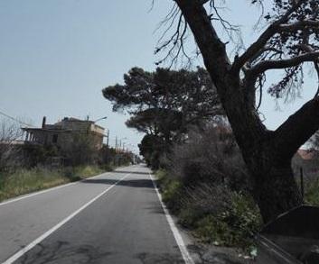 Spartà: alberi pericolanti sulla Ss 113, servono interventi