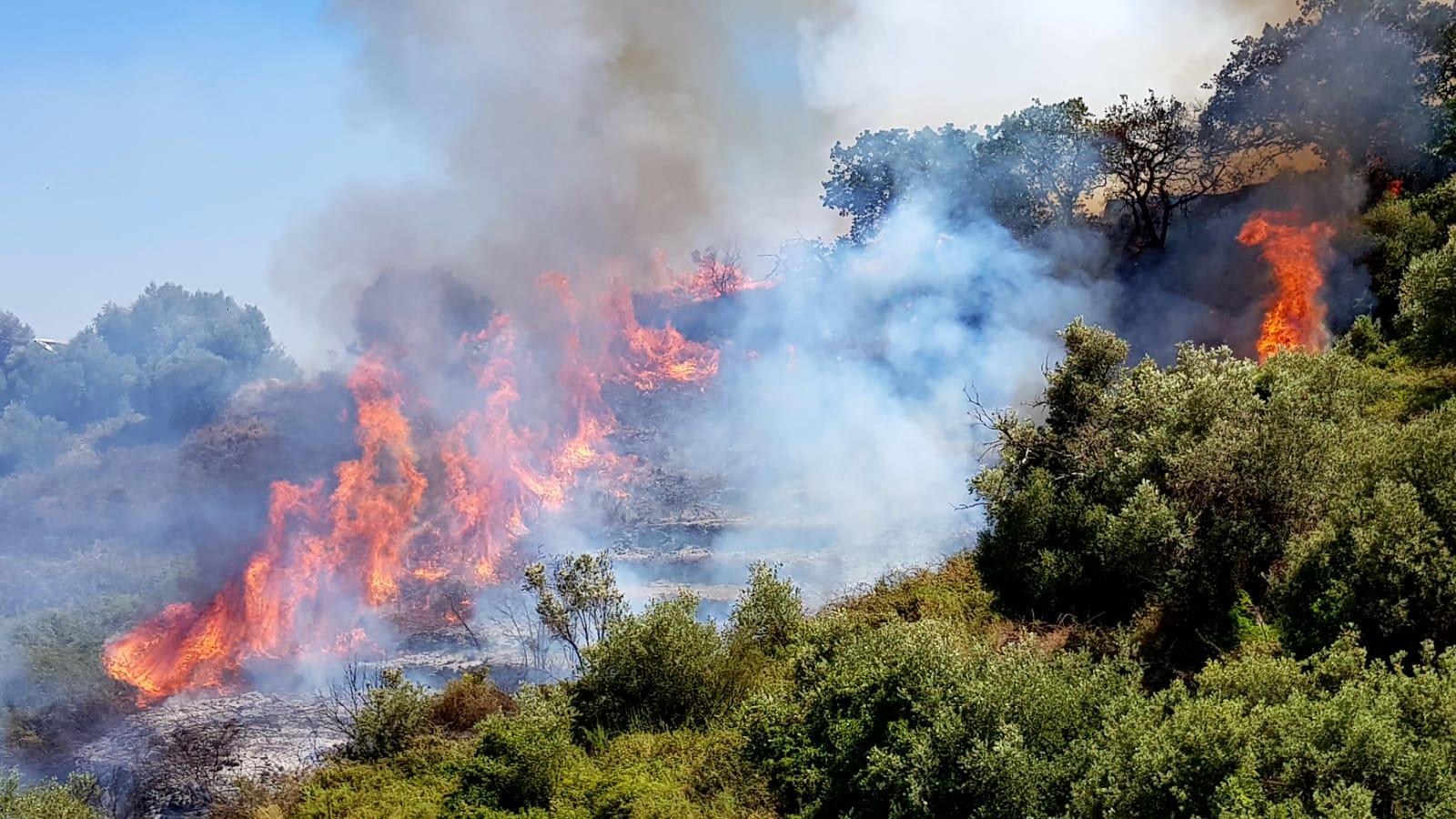 Incendi boschivi, finalmente si parla di prevenzione