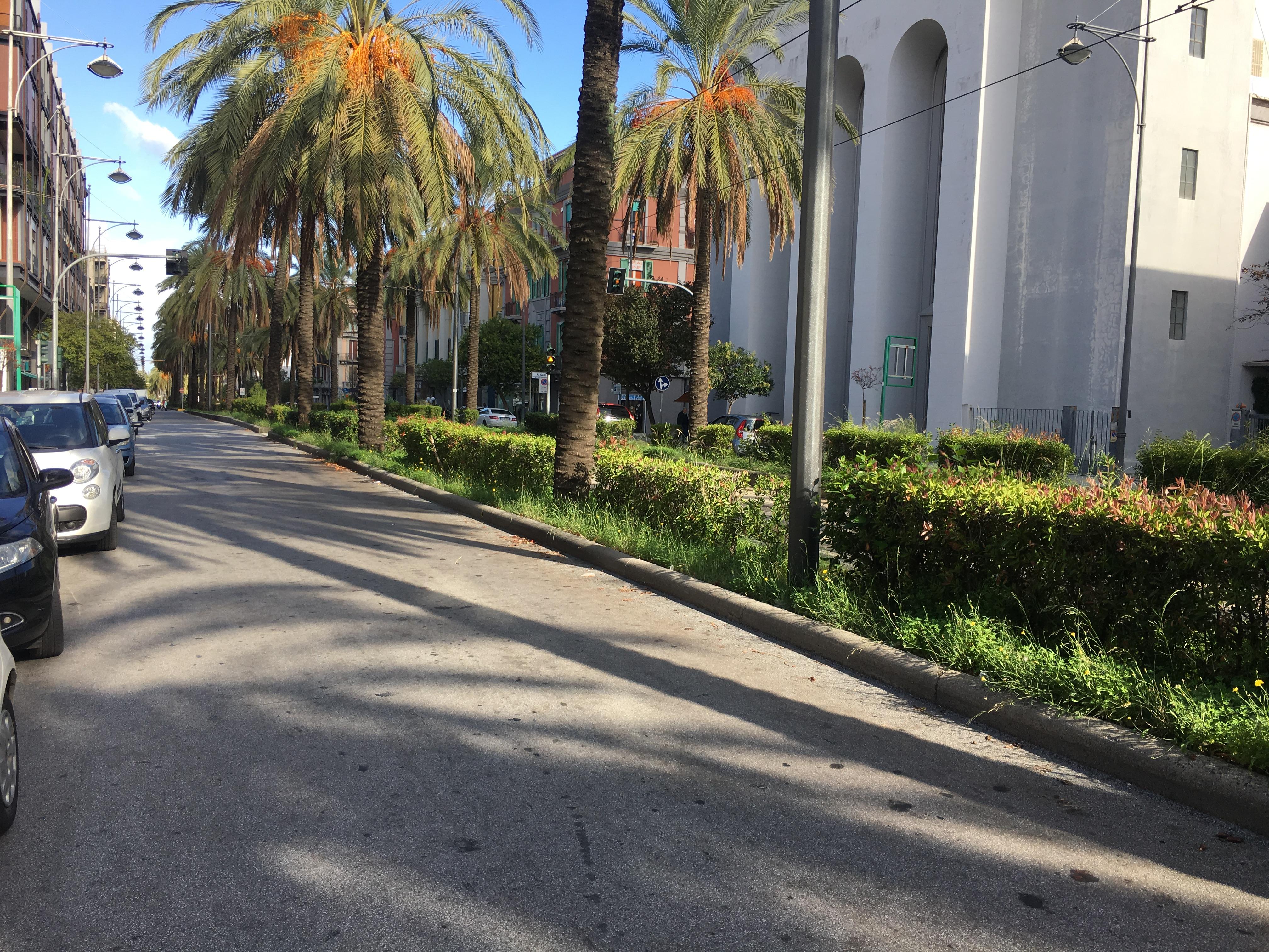 Potatura alberi, limitazioni sul viale San Martino