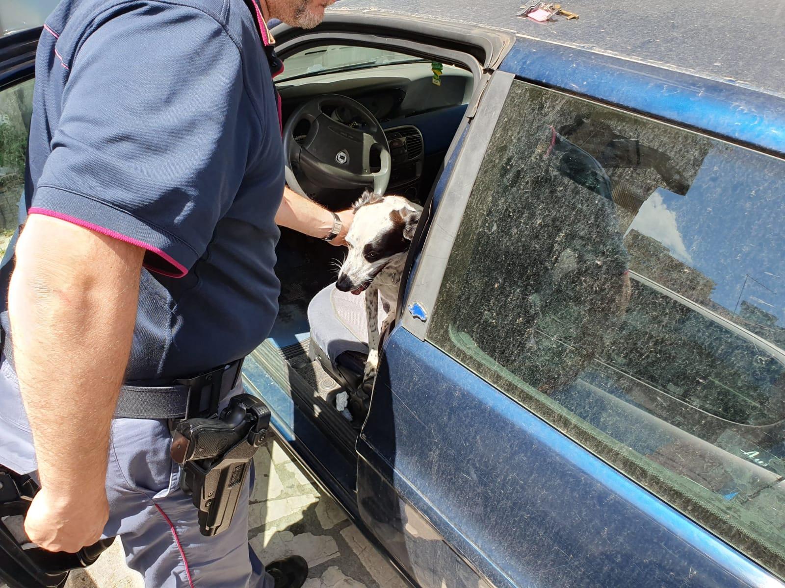 Meticcio chiuso in auto e sotto il sole salvato dalla polizia