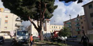 Villa Lina: avviata la potatura degli alberi a ridosso della chiesa di S. Matteo