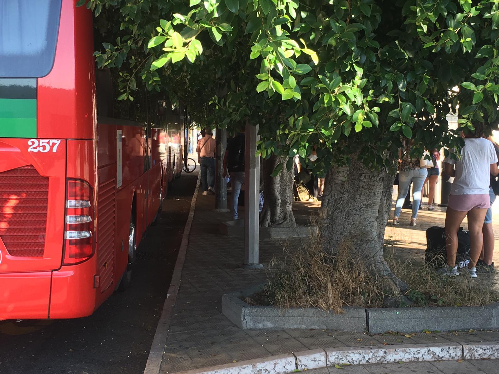 Potatura alberi, da domani interventi nel perimetro della stazione