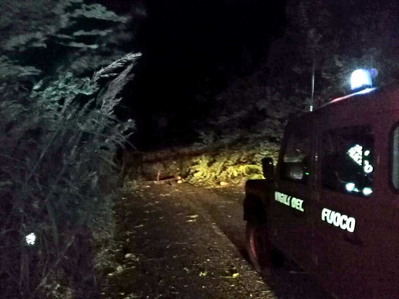 Portella Castanea, strada chiusa: albero sradicato dal vento
