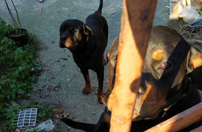 Boom di cani avvelenati in Sicilia, dati choc anche Messina