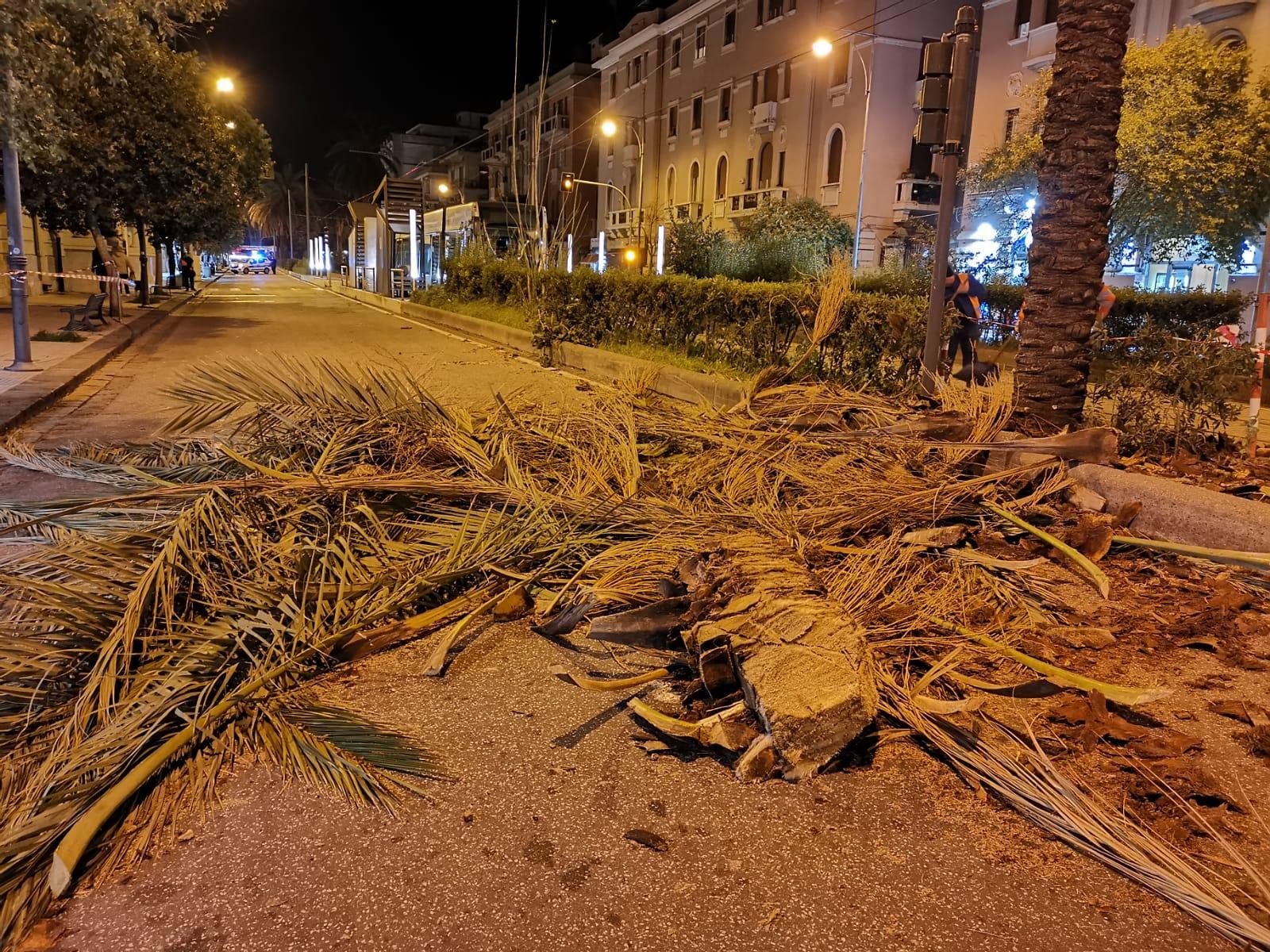 Vento forte, schianto di arbusti su viale San Martino