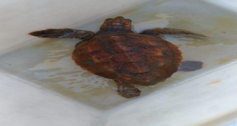 Caretta Caretta salvata nelle acque dello Stretto