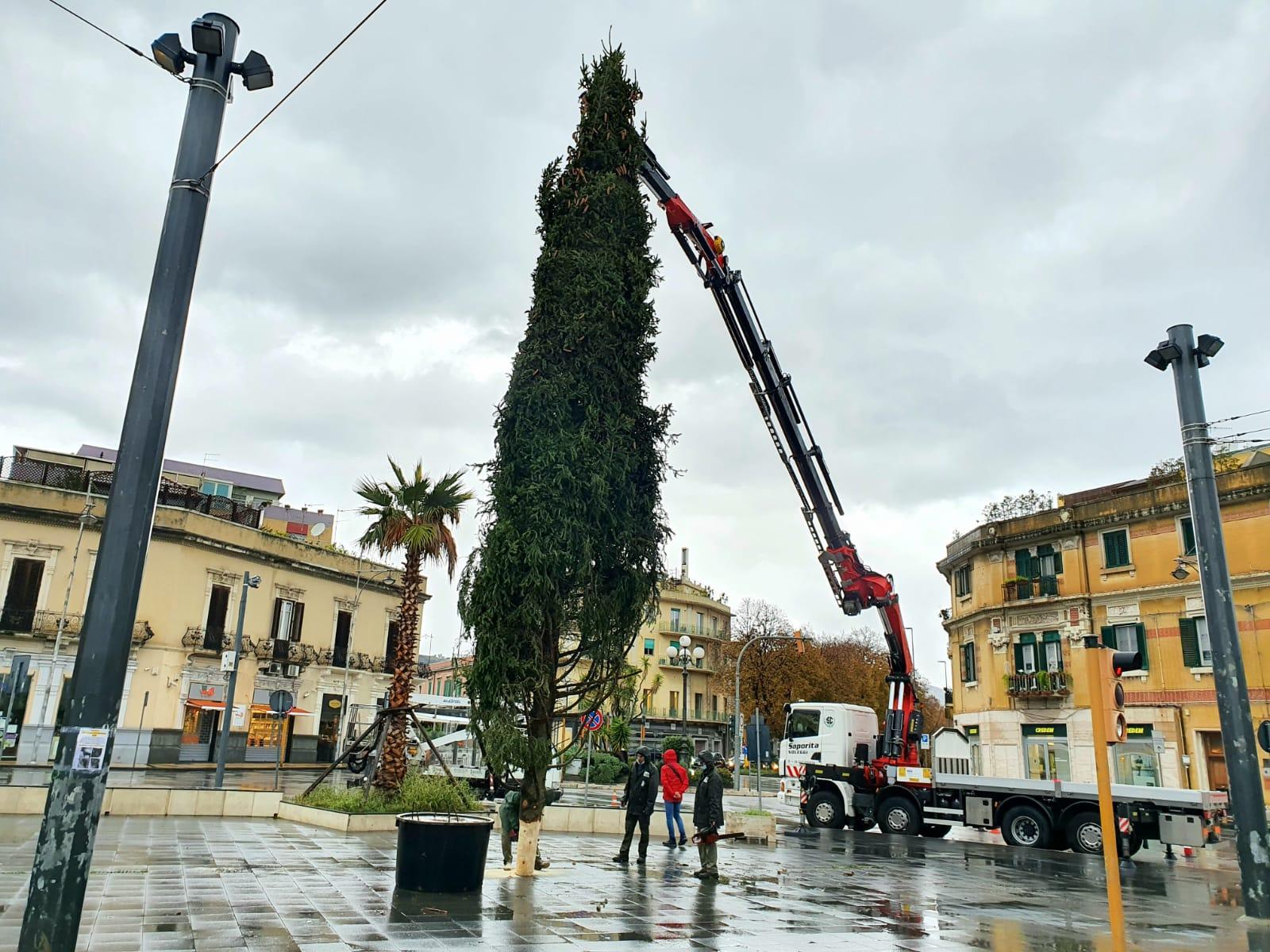 Aria di festa a piazza Cairoli: collocato l'albero di Natale