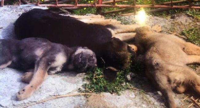 Patti, cane ucciso a fucilate e gettato nel fiume