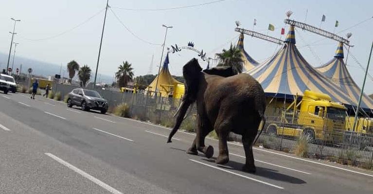 Messina, elefante scappa dal circo